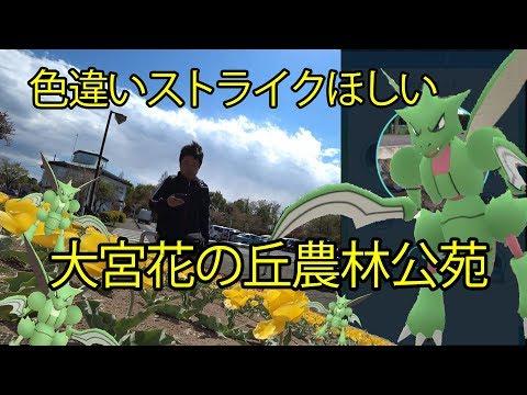 【ポケモンGO】ストライクの色違いを求め、チューリップ咲き誇る花の丘へ