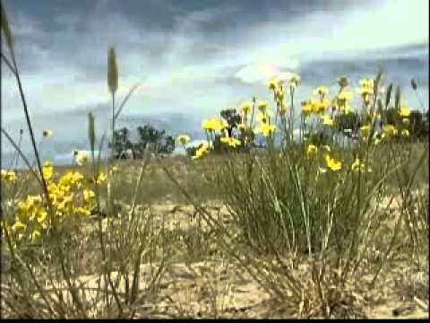 Reclamation Site in San Juan Basin
