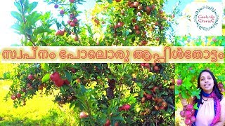 Gambar cover Apple Farm in New Zealand / A Must Watch!!