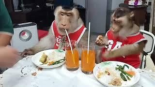 Jk Shaki Lunch TomYam In The House