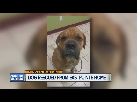 Dog rescued from Eastpointe