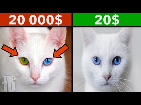 THE MOST EXPENSIVE PETS IN THE WORLD