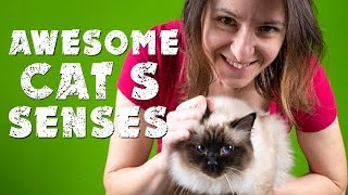 Awesome Cat's  senses | Birman cat | Cat's diary