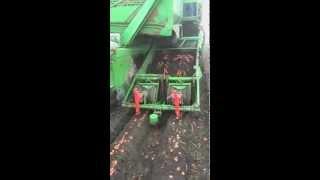 kopanie marchwi carrot harvester wuhlmaus 2733