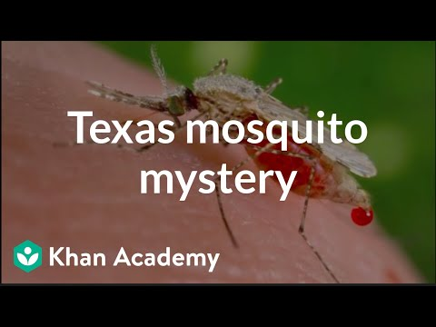 Population ecology: The Texas mosquito mystery | Crash Course ecology | Khan Academy