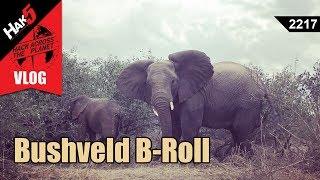 Bushveld B-Roll - Hack Across the Planet - Hak5 2217