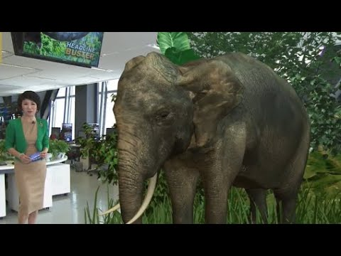 The Point: China's wild elephants make international headlines