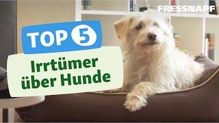 Top 5 Irrtümer über Hunde