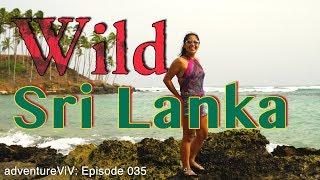 Wildlife and Beautiful Beaches in Sri Lanka