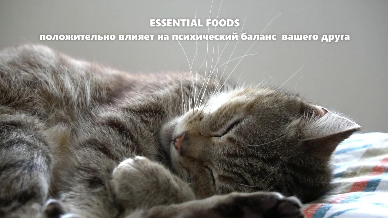 Сухой корм для кошек Essential Foods Jaguar bof