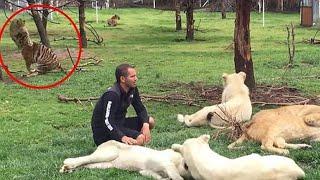 Inacreditavel! Tigre Salva Homem de um Ataque Mortal de Leopardo