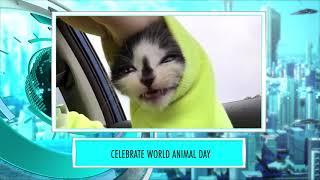 9XM Newsic | World Animal Day | Bade | Chote