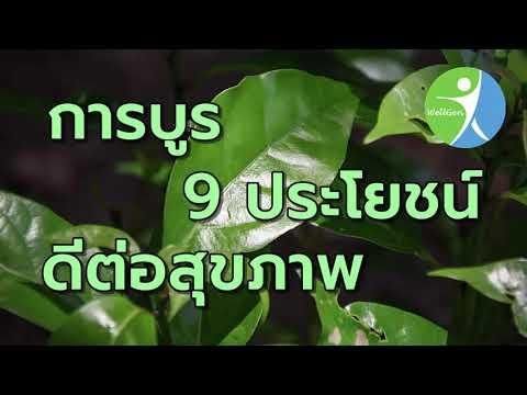 การบูร 9 ประโยชน์ดีต่อสุขภาพ WELLGENTHAILAND.COM