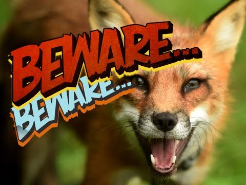BEWARE OF THE FOXES!!!