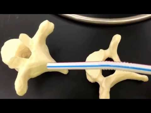The Vertebral Column & Thoracic cage or Bony Thorax