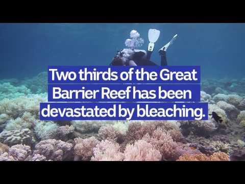 HACK: Great Barrier Reef has been devastated by bleaching