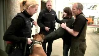 Polizeihunde im Einsatz