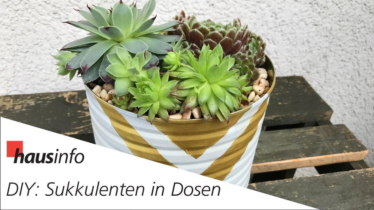 Diy Sukkulenten In Dosen Pflanzen Youtube