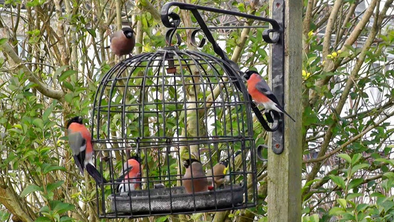 The Bird Cage - Anti Squirrel and Pigeon Proof Bird Feeder - YouTube