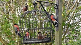 The Bird Cage - Anti Squirrel And Pigeon Proof Bird Feeder