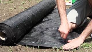Jak uprawiać bakłażana? c.d. - sadzenie rozsady