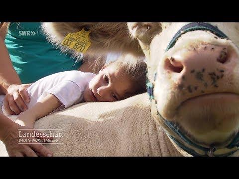 Tiertherapie mit Schaf,
