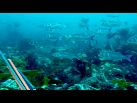 SPEARFISHING CORNWALL Autumn Wreck Hunting, Exploring And The Sea Bass Ep4
