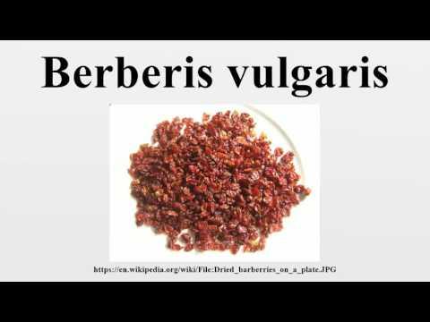 барбарис обыкновенный -