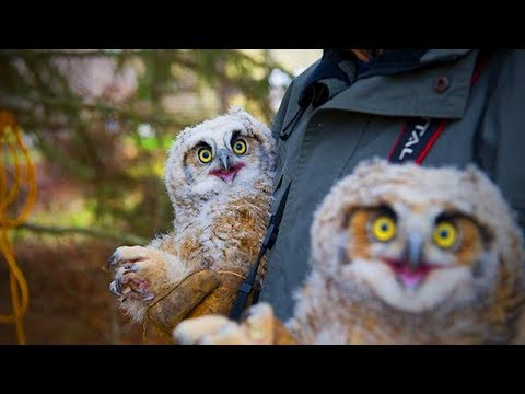 Amazing Funny Owls  Cute and Funny Owls Playing (Full) [Funny Pets]