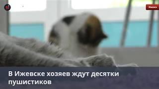 Всемирный день кошек в Ижевске