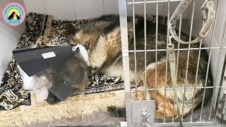 Хотели помочь сбитой собаке Но не хватило денег Обратились за помощью к людям