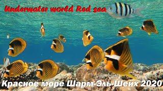 Подводный мир. Шарм-Эль-Шейх. Рас-Умм-Сид. Рыбки в Красном море.