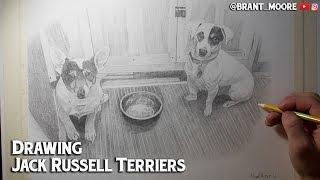 Drawing Jack Russell Terriers