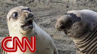 Is shocked seal the funniest wildlife photo of 2017?
