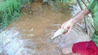 Çıplak Elle Balık Nasıl Yakalanır??? Video