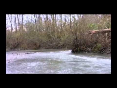 Wooldridge  |  17' Alaskan