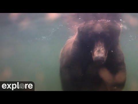 Underwater Bear Cam - Katmai National Park, Alaska powered by EXPLORE.org