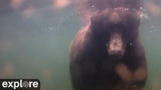 Underwater Bear Cam - Katmai National Park, Alaska powered by EXPLORE.org thumbnail