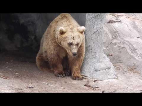 #89 ФИНЛЯНДИЯ: Зоопарк КОРКЕАСААРИ в Хельсинки / ZOO HELSINKI
