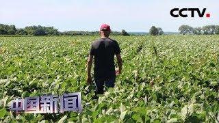 [中国新闻] 有关中国企业进行新的美国农产品采购 | CCTV中文国际