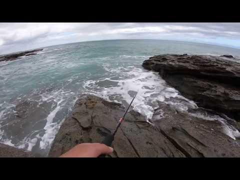 Australian Salmon On Lures | Fishing Lorne Pier