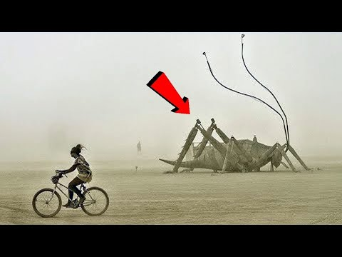 10 Massive Insects That Are Actually Real