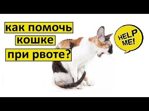 Рвота у кошки что делать | 3 совета