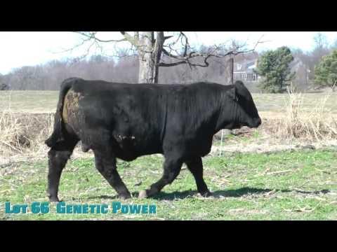 Lot 66  Genetic Power