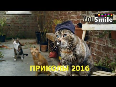 Отборные животные подборка из 10709 видео онлайн в хорошем