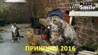 Лучшие Приколы 2016, #211 Видео приколы с животными лучшее смотреть всем, Смешные животные