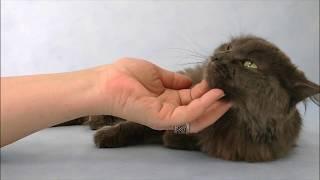 Самая ласковая кошка ищет дом