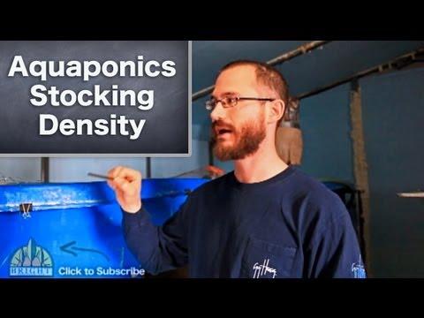 Aquaponics Stocking Density