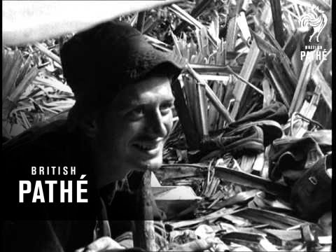 Jungle Raid In Malaya (1952)