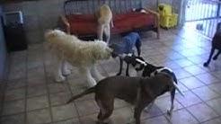 Dog Daycare 2-11-11 in Gilbert Az, Mesa Az, Chandler Az, Tempe Az, Scottsdale Az